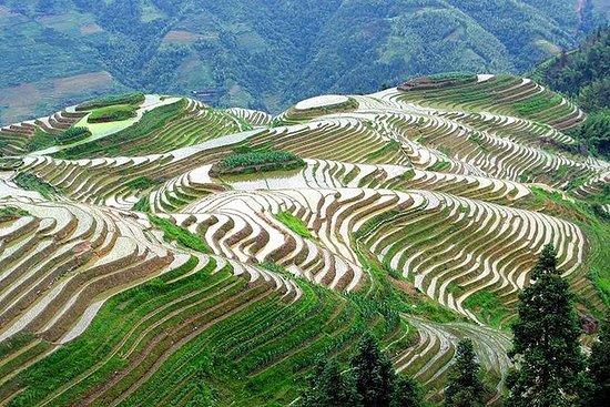 Longji Rice Terrace y Minority Private...