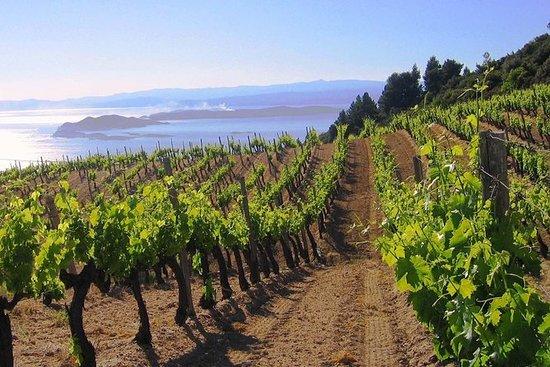Experimente o Tour de Vinhos e Azeites...