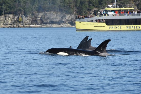 The Orca family together