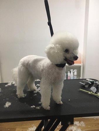 Canterbury, UK: Poodle hair cut