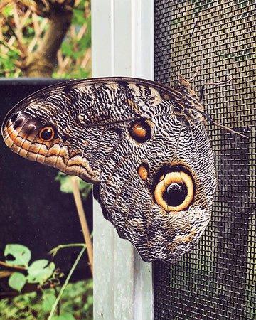 """Bellissima farfalla, l'unico tipo ancora """"in circolazione"""" nonostante la temperatura"""
