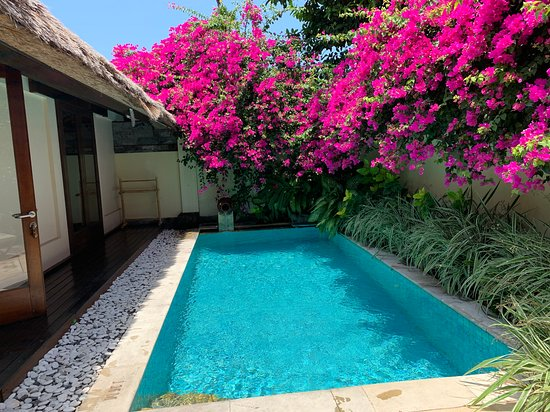 Private pool & beautiful flowers