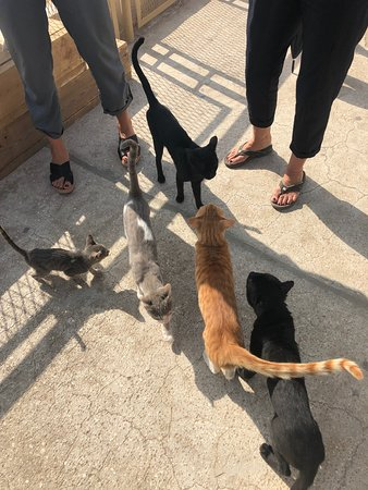 Isis loved Cats, they are all over her temple!