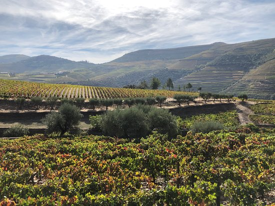 Douro Valley Wine Tour: Visit to Three Vineyards with Wine Tastings and Lunch: first vineyard - fantastic setting & views