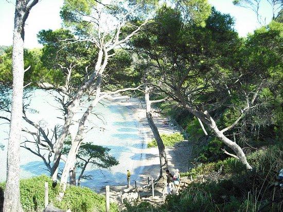 Relax su una delle spiaggette che l'isola offre, lontane dal caos, circondate da pini marittimi, popolati da varie specie di volatili .Acqua pulita e trasparente. Relax, sport , natura e cultura....
