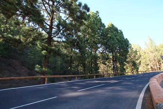 Sunset & Stargazing Experience in Teide with a Glass of Cava: Start of the Pine Forest, rest stop at Vilaflor.