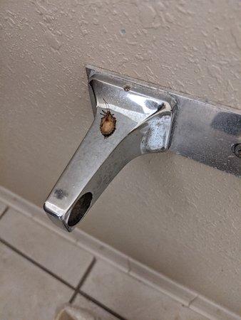 a dead bug on toilet paper holder