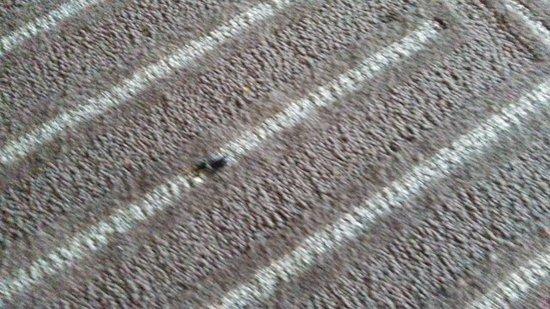 Bug under desk