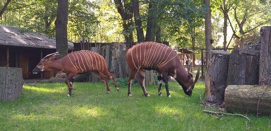Zoo strassenstrich duisburg beim Zoo