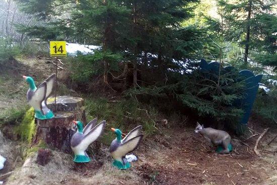 Kirchschlag bei Linz, Austria: Auf Entenjagd im 3D-Parcours