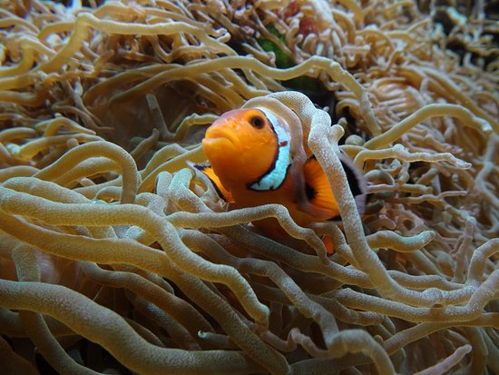Nemo was spotted at the sea aquarium of zoo