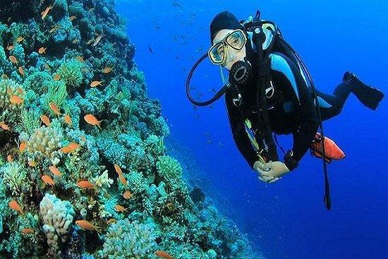 Sharm El-Sheikh: Red Sea Scuba Diving Day Trip