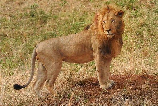 Across the Wild African Safaris