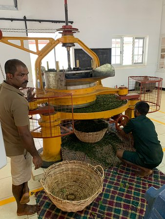 Mandaramnuwara, Sri Lanka: Watching the tea process