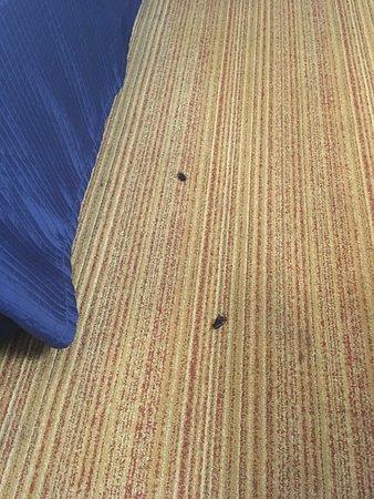 Dead roaches
