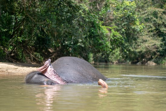 Elephant Care Relief Foundation: The elephant Mali at the local river getting ready for her bath.