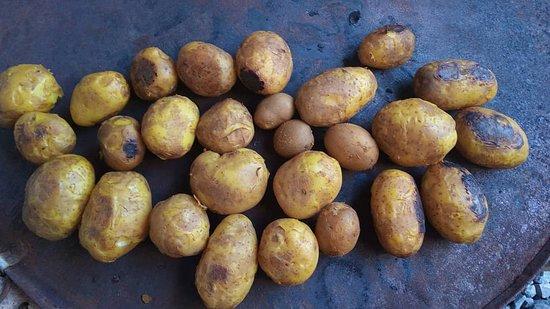 מחוז חמדאן, איראן: Potato