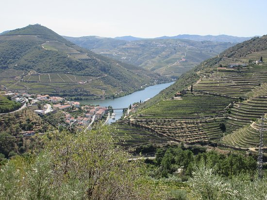 Douro Valley Wine Tour: Visit to Three Vineyards with Wine Tastings and Lunch: Duoro Valley