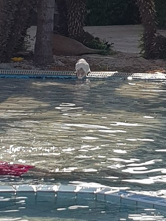Cats drinking out of the pool