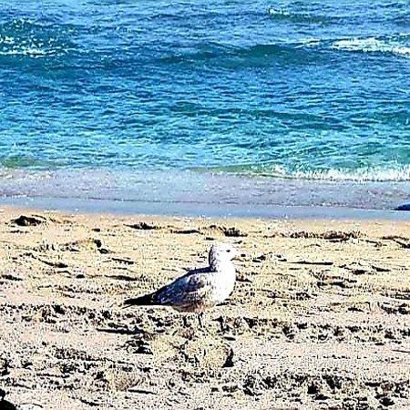 Ilıca Plajı ÇEŞME