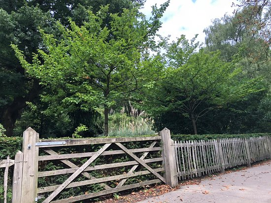 Holland park with children for day activities