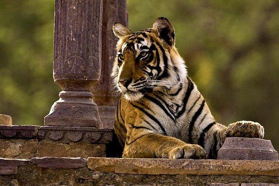 過夜到Ranthambore NP(Sawai Madhopur)從齋浦爾到Agra Drop照片