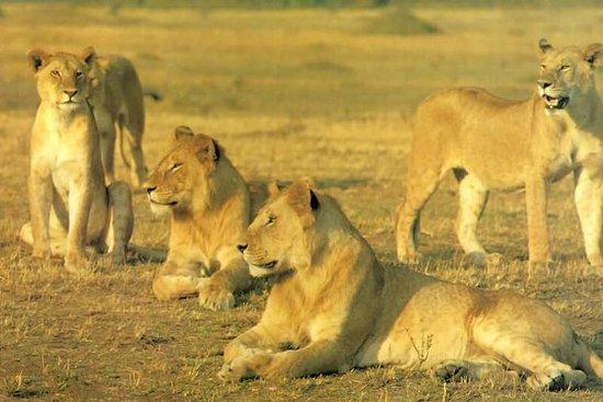Rocktrek Safaris Ltd