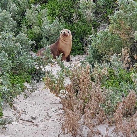 Bilde fra Seal Bay