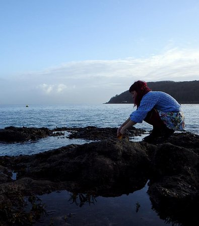 Seaweed Foraging with Vix