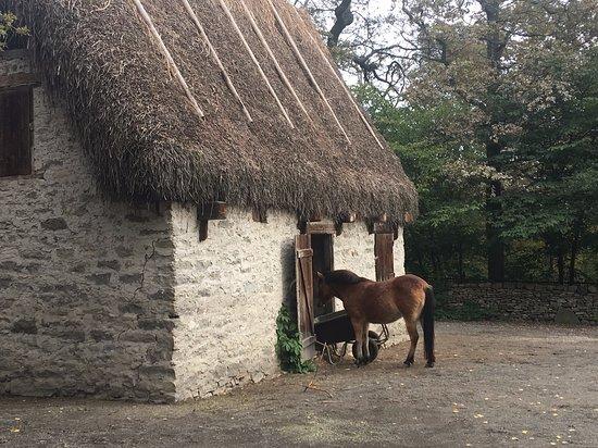 Entrada al museo al aire libre Skansen: Beautiful ponies