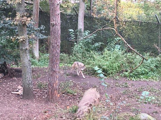 Entrada al museo al aire libre Skansen: Wolves