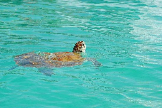 Cruises: turtle summoning