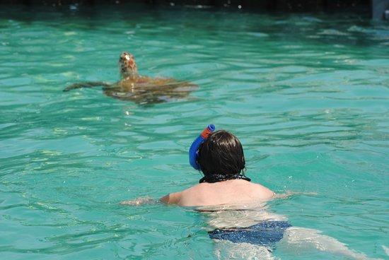 Cruises: Turtle Adventures