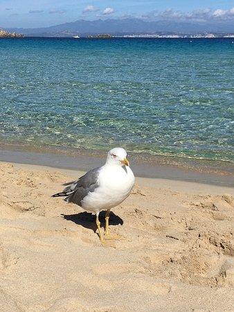 Σαρδηνία, Ιταλία: in spiaggia in compagnia