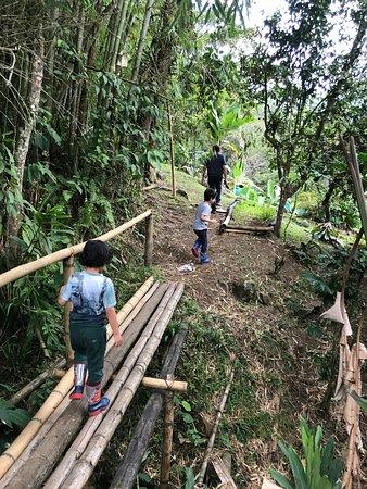 Pance, Colombia: recorrido por las plantas
