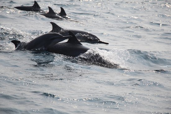 Kalpitiya, Sri Lanka: Dolphin Watching with Dolphin Wadiya Sri Lanka