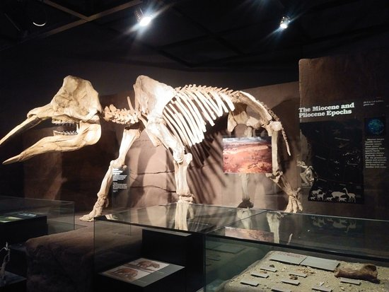Royal Tyrrell Museum: Exhibits