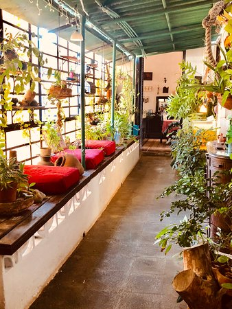 Indoor conservatory. Loved reading here. Such an original spot with goldfish too!