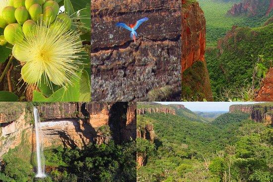 Biodiverse Brazil Tours