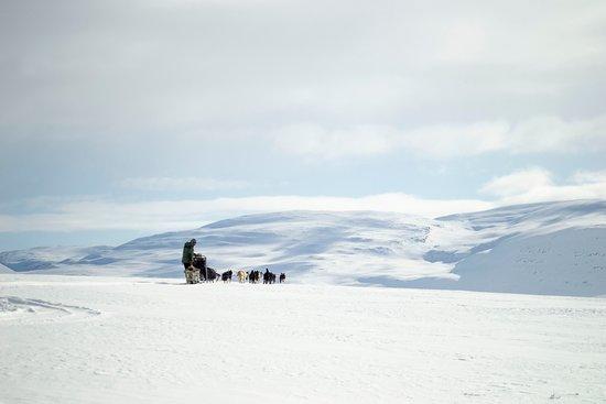 Gargia Husky The True North Experience