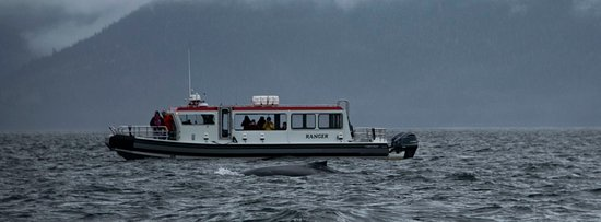 Private Small Group Whales and Wilderness Exploration: the tour boat with 1 whale in front of it