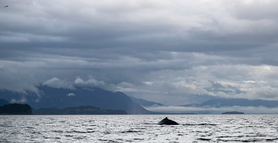 Private Small Group Whales and Wilderness Exploration: Nice Whale Shot