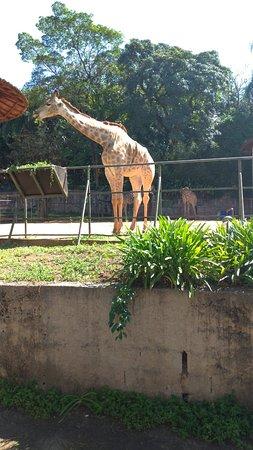 Foto Sao Paulo Zoo Admission Ticket