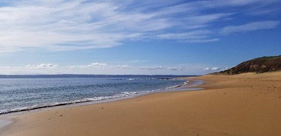Foto Phillip Island Penguin, Brighton Beach, Moonlit Sanctuary from Melbourne