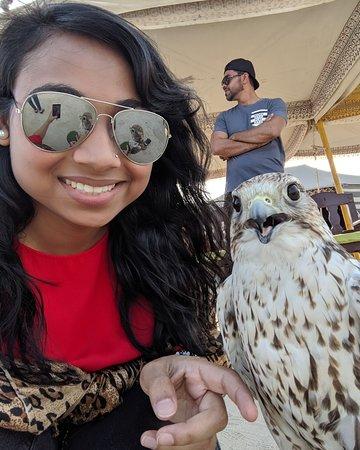 I spot a falcon!