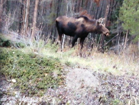 Фотография Discover Jasper and its Wildlife