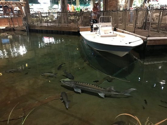 Boats On The Indoor Lake And Giant Fish Picture Of Bass Pro Shops At The Pyramid Memphis Tripadvisor