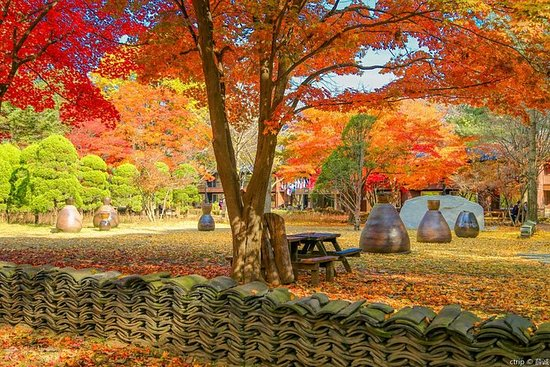 Private Group to Nami Island, the Garden of Morning Calm: Private tour to Nami Island ,Garden of Morning Calm, Petite France
