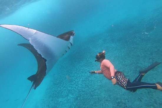 From Bali: Snorkelling with Manta...