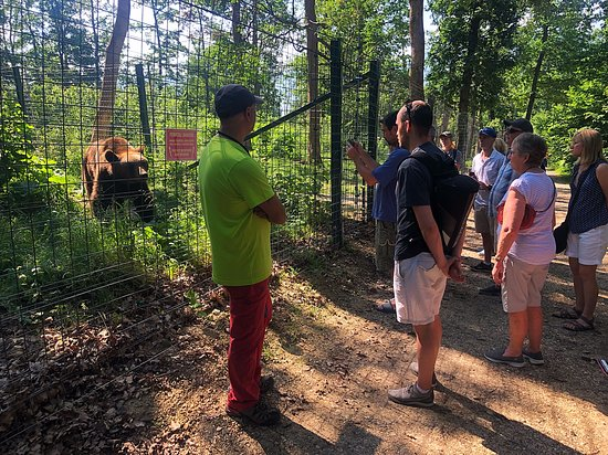Touring the Bear Sanctuary in Zarnesti.